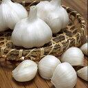 にんにく ホワイト六片 種球 約200g(10〜15個) 【国産】 [ 葫 球根 種 ]
