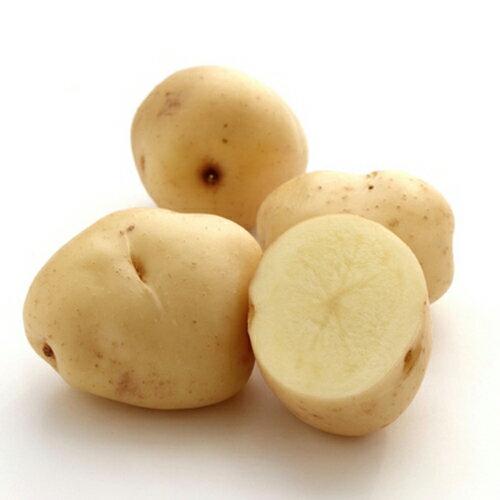 じゃがいも 種芋 【予約】 【 西豊 500g 入り】[ 馬鈴薯 ばれいしょ 種イモ 栽培 販売] 秋じゃが 秋ジャガ 秋馬鈴薯
