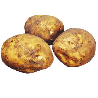 じゃがいも 種芋 【予約】 【 デジマ (出島) 500g 入り】[ 馬鈴薯 ばれいしょ 種イモ 栽培 販売] 秋じゃが 秋ジャガ 秋馬鈴薯