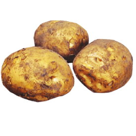 じゃがいも 種芋 【予約】 【 デジマ (出島) 2kg 入り】[ 馬鈴薯 ばれいしょ 種イモ 秋じゃがいも 秋ジャガイモ 栽培 販売] 秋馬鈴薯