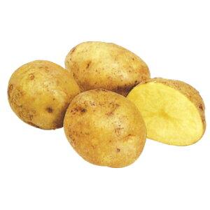 じゃがいも 種芋 【予約】【 キタアカリ 2kg 入り】[馬鈴薯 ばれいしょ 種イモ 栽培 販売]