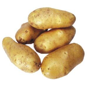 じゃがいも 種芋 【予約】【 高級メークイン(メークィーン) 2kg 入り】[馬鈴薯 ばれいしょ 種イモ 栽培 販売]