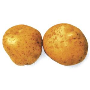 じゃがいも 種芋 【 農林一号 1kg 入り】[馬鈴薯 ばれいしょ 種イモ 栽培 販売]