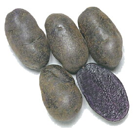 じゃがいも 種芋 【予約】 【 シャドウクイン 1kg 入り】[馬鈴薯 ばれいしょ 種イモ 栽培 販売]