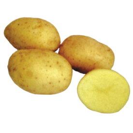 じゃがいも 種芋 【予約】 【 シンシア 1kg 入り】[馬鈴薯 ばれいしょ 種イモ 栽培 販売]