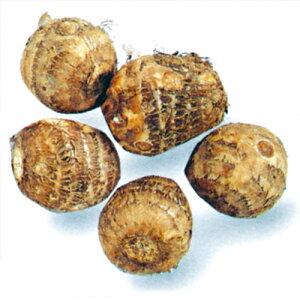 おいしい小芋がぽこぽこできる!石川早生1kg(里芋種)