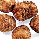 里芋(さといも) 【予約】【絹ひかり】 種芋 500g(7〜10個入り)[ サトイモ タネイモ 栽培 通販 販売 ]