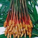 しょうが 【 金時生姜 】 生姜種 種芋 1kg入り [ ショウガ しょうが 栽培 通販 販売 ]
