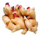 しょうが 大生姜(お多福) 種芋 1kg [ ショウガ しょうが 栽培 通販 販売 ]