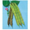 つるありいんげん 種 【むらさき菜豆】 小袋 ( 種 野菜 野菜種子 野菜種 )