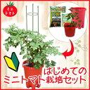 【送料無料】【 はじめてのミニトマト栽培セット 】ミニトマト「さくらんぼ」苗 1本付き 栽培セット