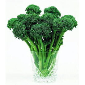 ブロッコリー 野菜苗 【スリム】 苗 12本セット 【予約販売】