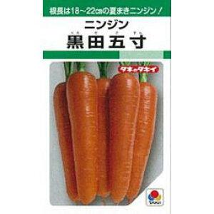 にんじん 種 【 黒田五寸 】 種子 1L缶 ( 種 野菜 野菜種子 野菜種 )