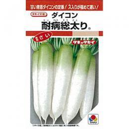 【エントリーでポイント5倍】大根 種 【耐病総太り】 RF 9ml ( 種 野菜 野菜種子 野菜種 )