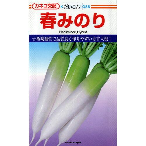 大根 種 【 春みのり20ml 】 種子 小袋(約20ml) ( 種 野菜 野菜種子 野菜種 )