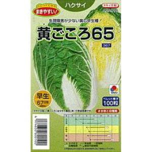白菜 種 【 黄ごころ65 】 種子 小袋(約100粒) ( 種 野菜 野菜種子 野菜種 )