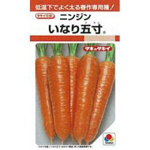 にんじん 種 【 いなり五寸 】 種子 小袋(約20ml) ( 種 野菜 野菜種子 野菜種 )