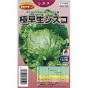 レタス 種 【 極早生シスコ 】 種子 小袋(約150粒) ( 種 野菜 野菜種子 野菜種 )