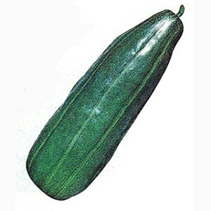 ウリ 種 【 青はぐら瓜 】 種子 小袋(約3ml) ( 種 野菜 野菜種子 野菜種 )