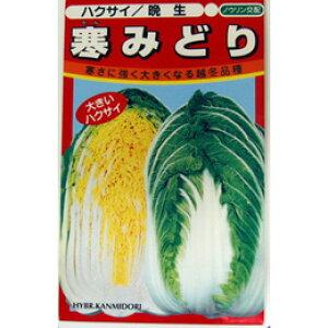 白菜 種 【 寒みどり 】 種子 小袋(約100粒) ( 種 野菜 野菜種子 野菜種 )