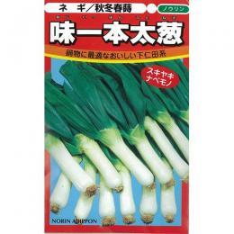 ネギ 種 【 味一本太葱 (下仁田ダルマ葱) 】 種子 2dl ( 種 野菜 野菜種子 野菜種 )