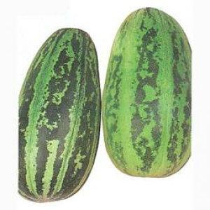 ウリ 種 【 かわずうり 】 種子 小袋(約10ml) ( 種 野菜 野菜種子 野菜種 )