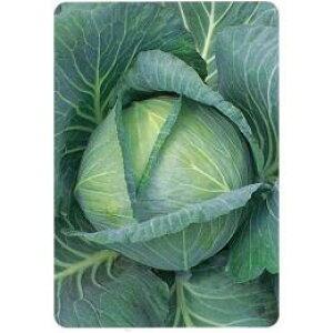 キャベツ 種 【 YR耐病ST 】 種子 20ml ( 種 野菜 野菜種子 野菜種 )
