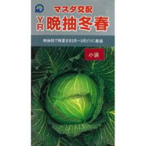 キャベツ 種 【 YR晩抽冬春 】 種子 コート5千粒 ( 種 野菜 野菜種子 野菜種 )