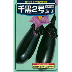 なす 種 【千黒2号】 20ml ( 種 野菜 野菜種子 野菜種 )
