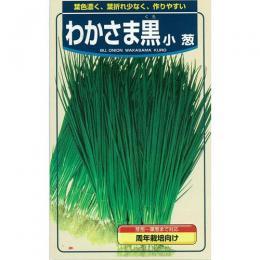 ネギ 種 【 小ネギわかさま黒 】 種子 2dl ( 種 野菜 野菜種子 野菜種 )