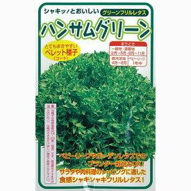 レタス 種 【 レタスハンサムグリーン 】 種子 Lコート1000粒 ( 種 野菜 野菜種子 野菜種 )