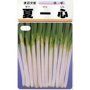 ネギ 種 【 夏一心 】 種子 小袋(約20ml) ( 種 野菜 野菜種子 野菜種 )