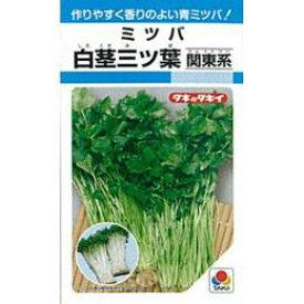 三つ葉 種 【 白茎ミツバ (関東系) 】 種子 1L ( 種 野菜 野菜種子 野菜種 )