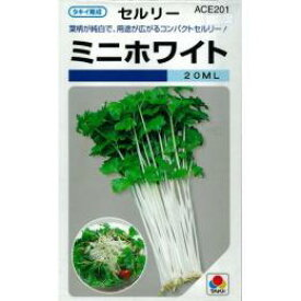 セルリー 種 【 ミニホワイト 】 種子 1dl ( 種 野菜 野菜種子 野菜種 )