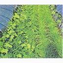 雑穀 種 【 マルチ大麦百万石 】 種子 1kg ( 種 野菜 野菜種子 野菜種 )