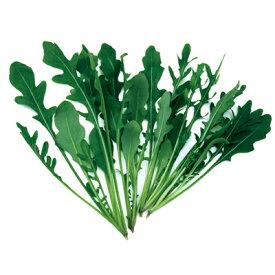ルッコラ(セルバティカ) 種 1dl 【 野菜のタネ ベビーリーフ 】