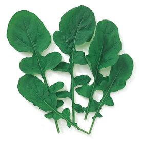 ベビーリーフ 種 【 ルッコラ(ロケット) 】 種子 小袋(約1dl) ( 種 野菜 野菜種子 野菜種 )