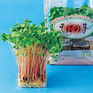 そばの芽 種 1L 【 野菜のタネ スプラウト・もやし 】