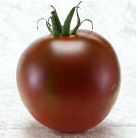 中玉トマト 種 【マラケシアンヒップ】 8粒 ( 種 野菜 野菜種子 野菜種 )