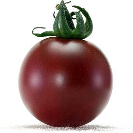 ミニトマト 種 【プチポンバイオレット】 8粒 ( 種 野菜 野菜種子 野菜種 )