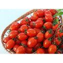 ミニトマト 種 【グラッセレッド】 20粒 ( 種 野菜 野菜種子 野菜種 )