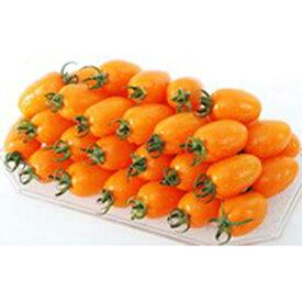 ミニトマト 種 【グラッセオレンジ】 20粒 ( 種 野菜 野菜種子 野菜種 )