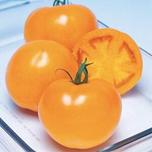 トマト 種 【 桃太郎ゴールド シスリコピンリッチ 】 小袋(15粒) ( トマトの種 )