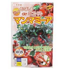 トマト 種 【 そのまんまdeミニトマト マンマミーア 】 小袋(15粒) ( 種 野菜 野菜種子 野菜種 )