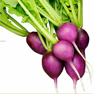 二十日大根 種 【 すみれちゃん 】 小袋(20ml) ( 種 野菜 野菜種子 野菜種 )