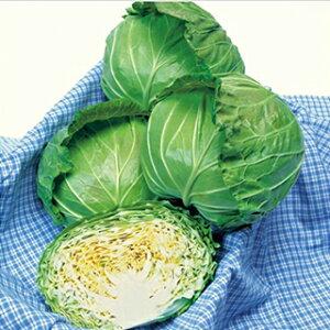 キャベツ 種 【 輝岬 】 小袋(2000粒) ( 種 野菜 野菜種子 野菜種 )
