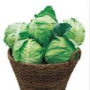 キャベツ 種 【 秋蒔極早生二号 】 小袋(2000粒) ( 種 野菜 野菜種子 野菜種 )
