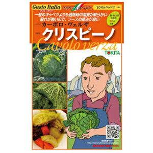 サボイキャベツ種【クリスピーノ】小袋(種野菜野菜種子野菜種)
