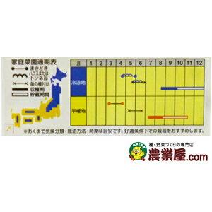 カボチャ種【すずなりバタ子さん】100粒(カボチャの種)