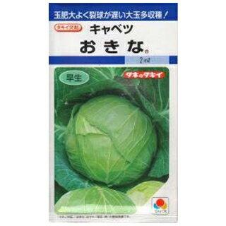 キャベツ 種 【おきな】 DF 2ml ( 種 野菜 野菜種子 野菜種 )
